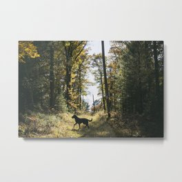 A Walk with Charlie Metal Print