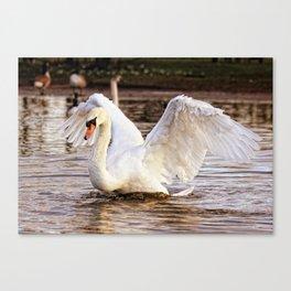 Elegant Swan Canvas Print