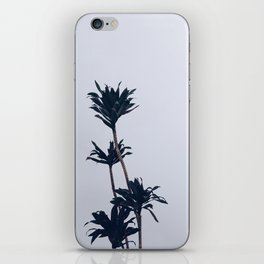 Dracaena Plant iPhone Skin