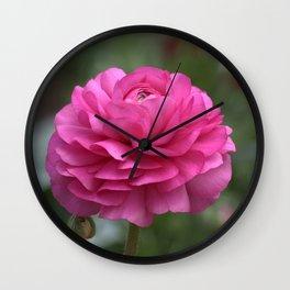 Ranunculus Pink Wall Clock