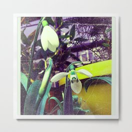 Snow Drop Metal Print