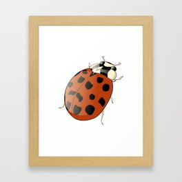 Harmonia axyridus - Asian Ladybeetle Framed Art Print