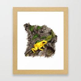 Golden Frog Framed Art Print