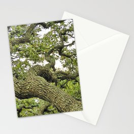 Live Oak of Coastal Texas Stationery Cards