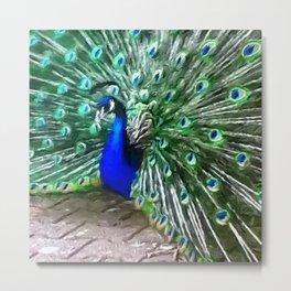 Painted Peacock Metal Print
