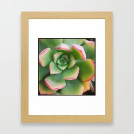 Dana Point Succulent 4 Framed Art Print