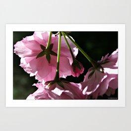 Pink Blooms Art Print