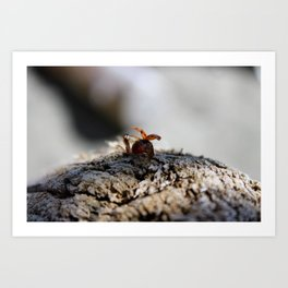Fly away Lady Bug Art Print
