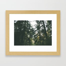 Forest XVII Framed Art Print