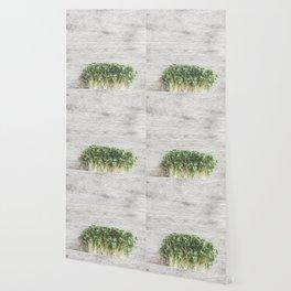 Fresh herbs for kitchen Wallpaper