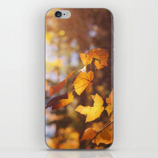 sun soaked autumn iPhone & iPod Skin
