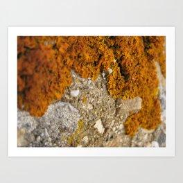 Orange lichen macro 2 Art Print