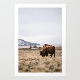 Bison feeding Art Print