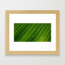 Natural Curves Framed Art Print