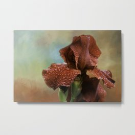 Bearded Iris Metal Print