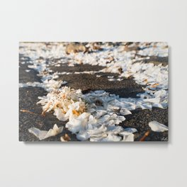 Flowers on Cobblestones Metal Print