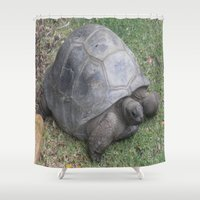 tortoise Shower Curtains featuring tortoise by shannon's art space
