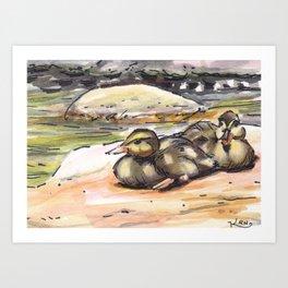 baby ducks Art Print