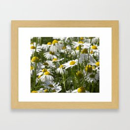 white daisies Framed Art Print