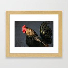 Rooster | Hahn Framed Art Print