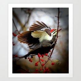 Fluffed Pileated Woodpecker Art Print