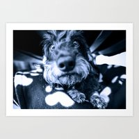 DACKEL DOG#3 Art Print
