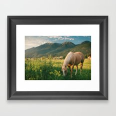 Pretty Horse Eating Grass in the Montana Sunset Framed Art Print