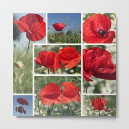 Poppies Collage Metal Print