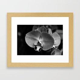 Black Orchid Framed Art Print