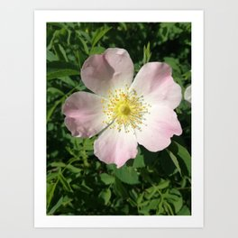 beautiful flower, nature Art Print
