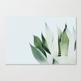 Agave I Canvas Print