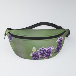 Lavender flower in tin pot Fanny Pack