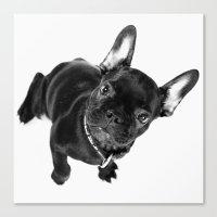bulldog Canvas Prints featuring Bulldog by Falko Follert Art-FF77