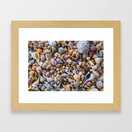 Seashell Collection Framed Art Print