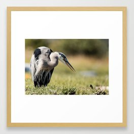 Relaxing Great Blue Heron | Wildlife Photography | Birds Framed Art Print