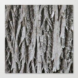 Rustic Tree Bark Canvas Print