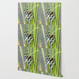 Dragon Fly 2 Wallpaper