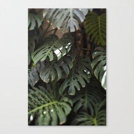 Monstera - botanical photography Canvas Print