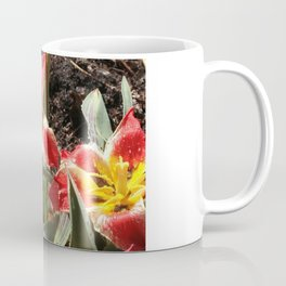 Tulips, Red and Yellow Striped Coffee Mug