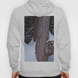 Snowy Pine Burl Hoody