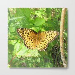 Watercolor Butterfly, Arctic Fritillary Butterfly 01, Cape Breton, Nova Scotia, Canada, Tail Flick Metal Print