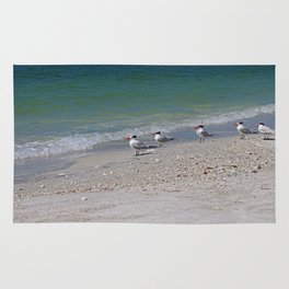Dolphin Watching on Lover's Key Rug