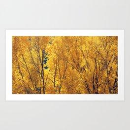 Colorado Gold Art Print