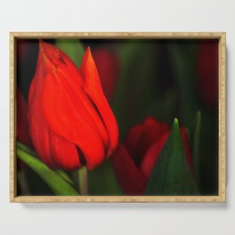 Tulips for mother Serving Tray