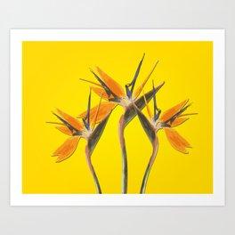 strelitzia - Bird of Paradise Flowers II Art Print