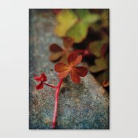 clover Canvas Prints featuring Clover by LoRo  Art & Pictures