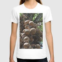Cannonball Tree Fruit T-shirt