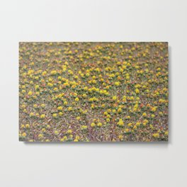Safflower Field Metal Print