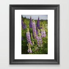 Alaskan Lupines Framed Art Print