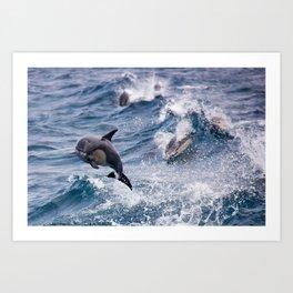 Common Dolphins - Landscape Art Print